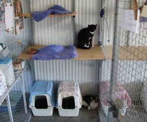 smokey and bandit, from wodonga, love to share a double house in our cattery