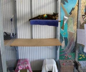 Sushi is from wodonga and loves our cattery