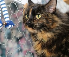 Suchi has moved to baranduda and plays in our cattery