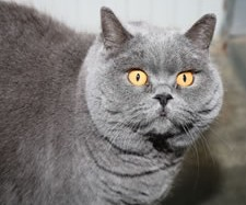 image of albury cat in our cattery