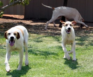 these three come from one house in wodonga