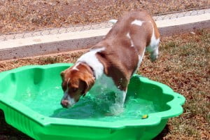 bella from baranduda playing in the pool